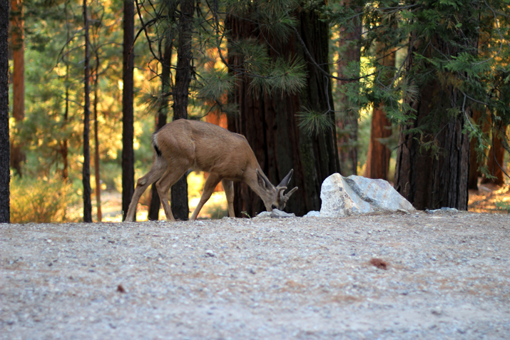Yosemite park (11)