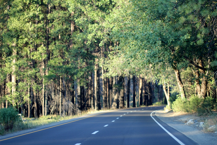 Yosemite park (21)