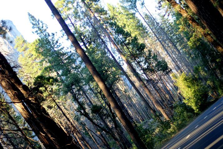 Yosemite park (22)
