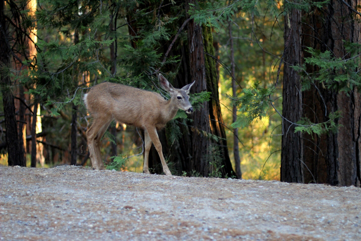 Yosemite park (23)