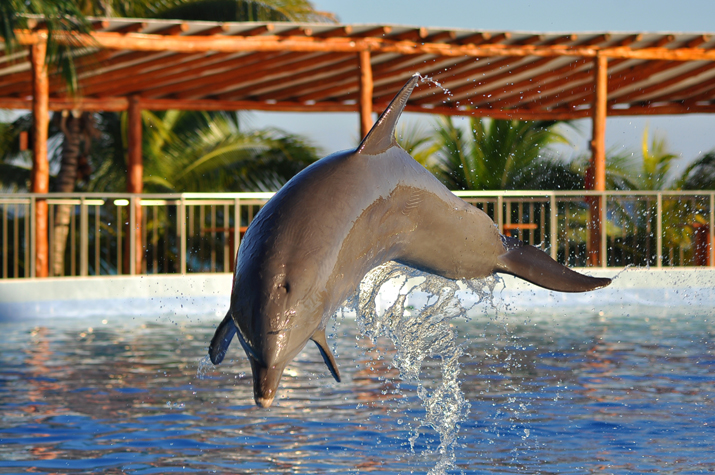 Dolphin_discovery-Monica_Sors (3)