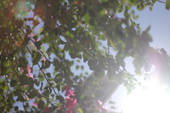 SANTORINI_TRAVEL_BLOG (9)