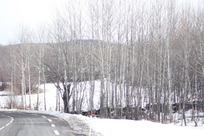 La-Cerdanya-nieve (1)