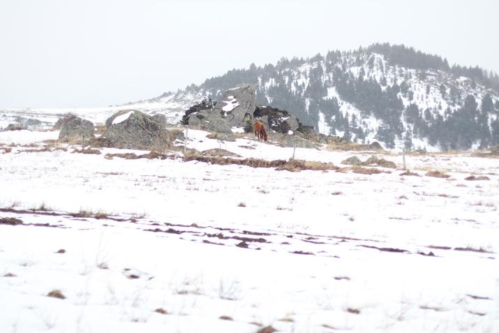 La-Cerdanya-nieve (4)