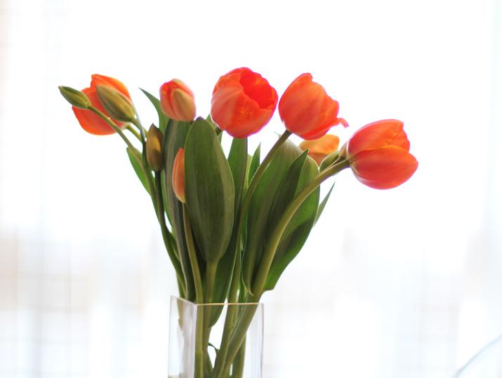 cuidar-tulipanes (1)