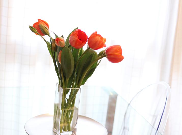 tulips-care (5)
