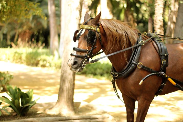 parque-maria-luisa-sevilla-blogger (13)