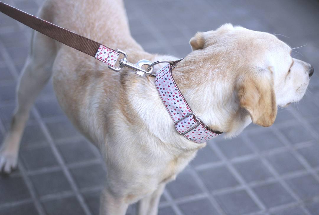 Brott-Barcelona-dog-def
