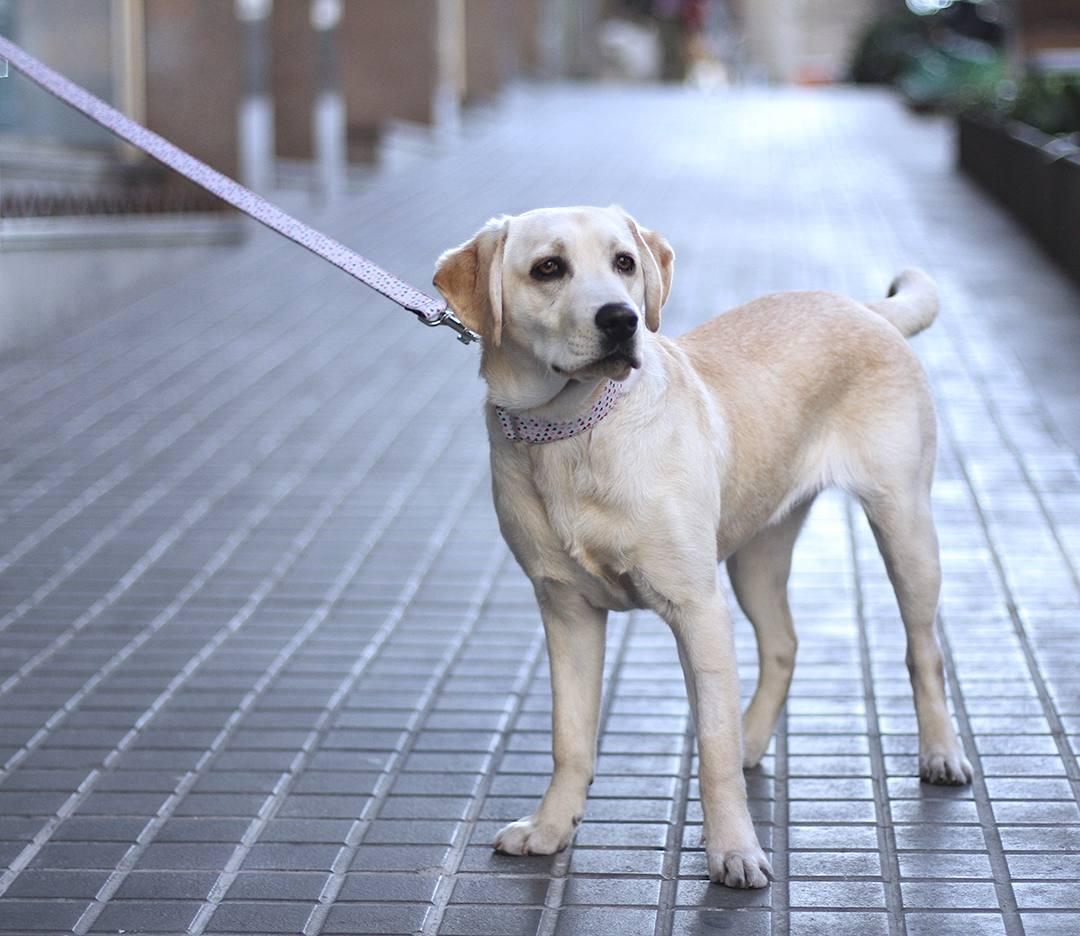 allie-dog-blogger