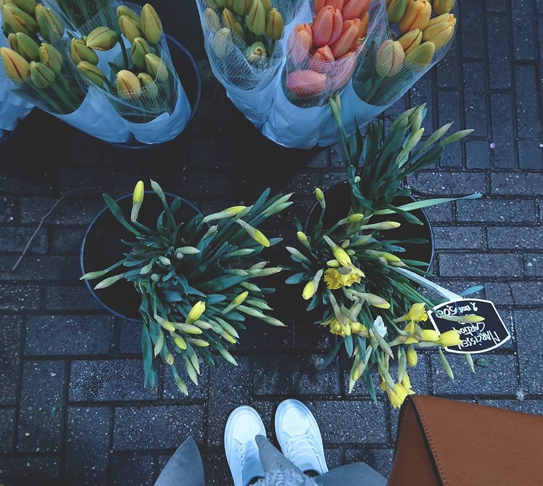 amsterdam-tulips-