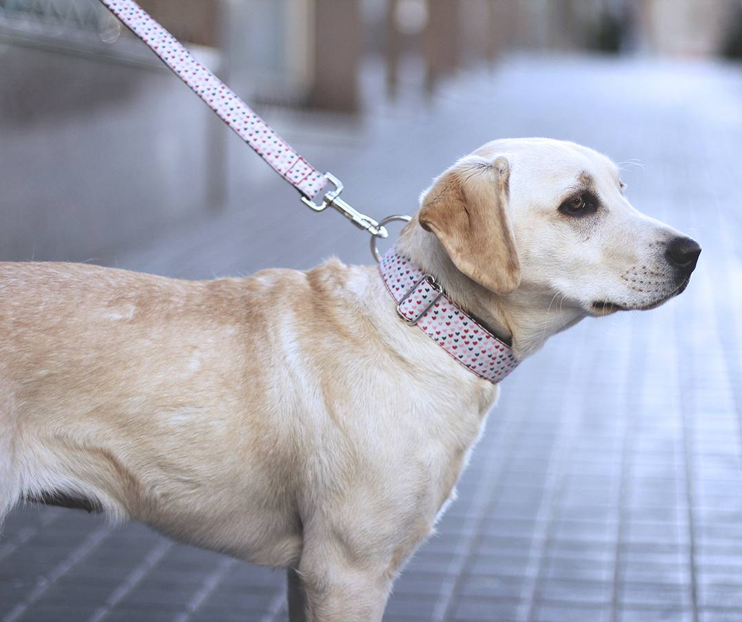 labrador-dog-blogger-allie