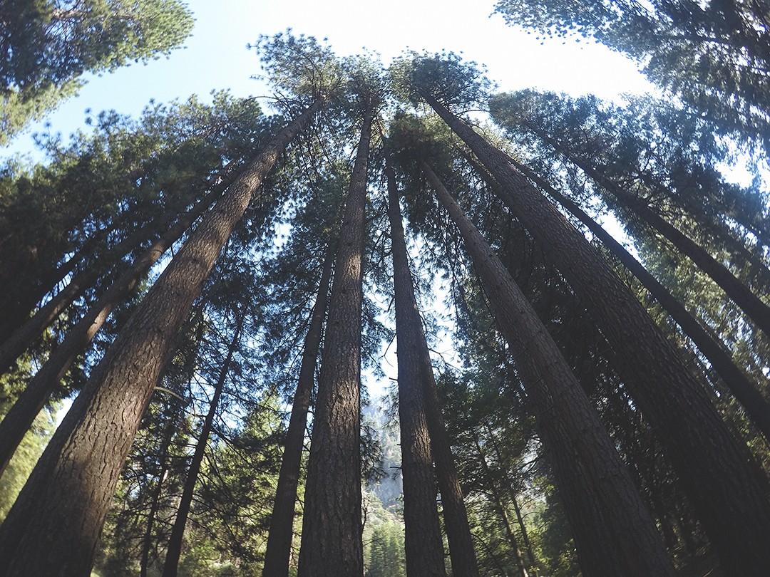 yosemite-national-park-travel-blogger-2016